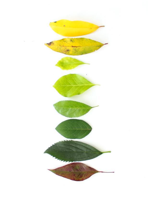 leaf gradients - summer adventures